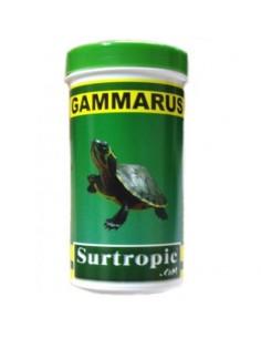 GAMMARUS SURTROPIC